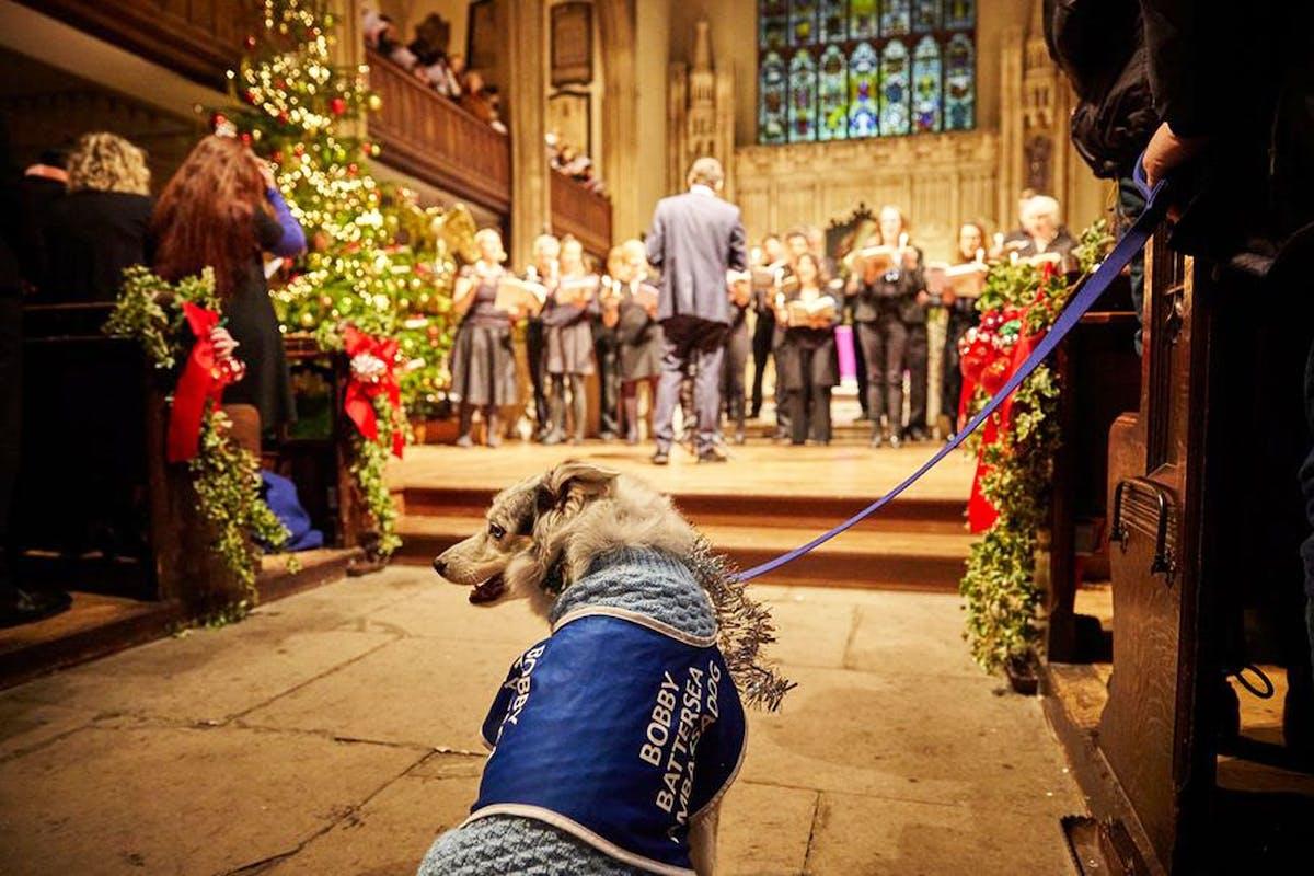 A dog sits in a church