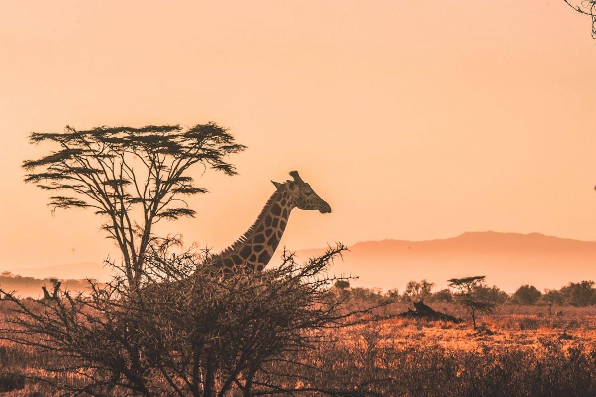 tanzania serengeti national park safari