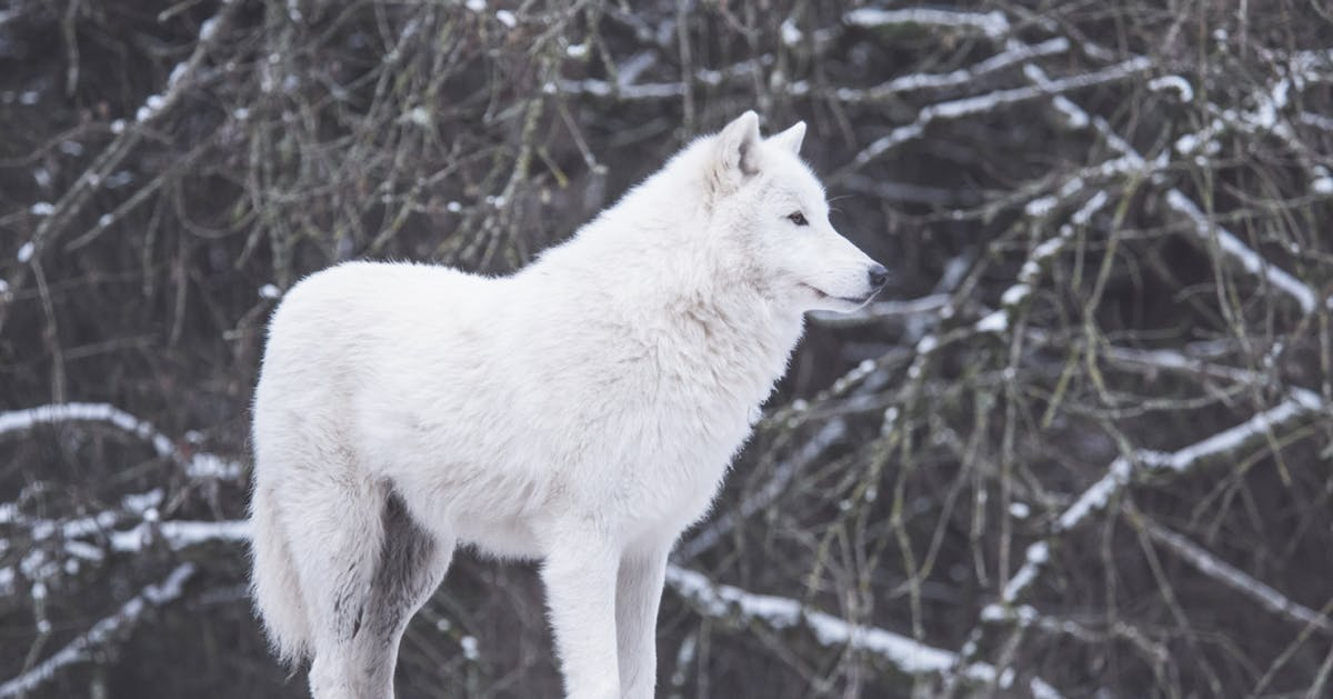 """""""What working with wild wolves taught me about being a woman"""""""