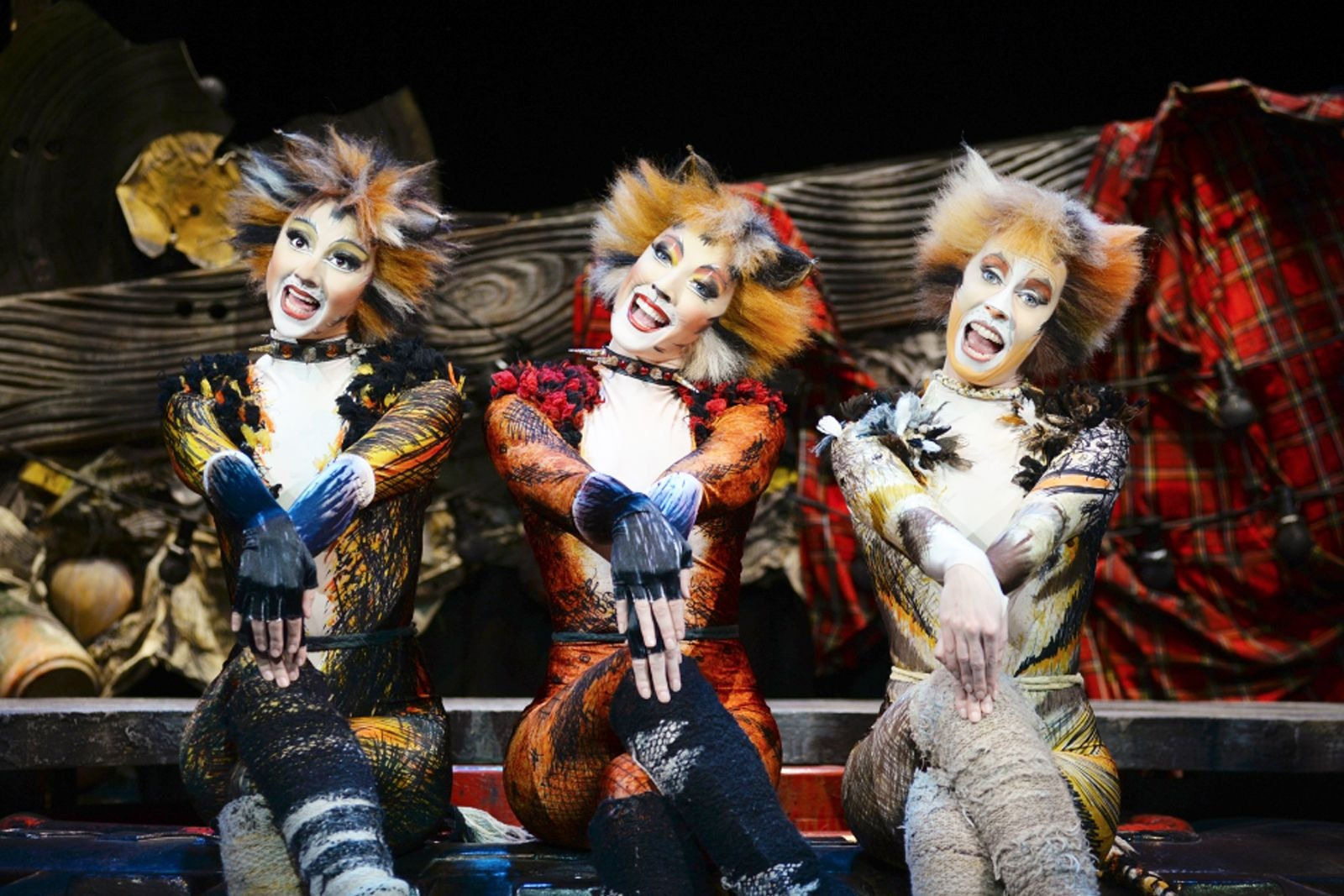 What is Cats the musical actually about?