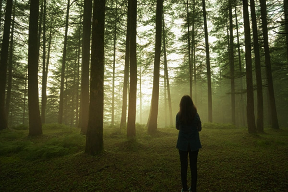 Outdoor silhouette image of a girl standing alone in pine forest at twilight in spring season. She is standing by folded arms and looking at beautiful view of golden sunlight glowing through horizon and cluster of pine tree trunks. She is standing by her back at camera. One person, full length, horizontal composition with copy space.