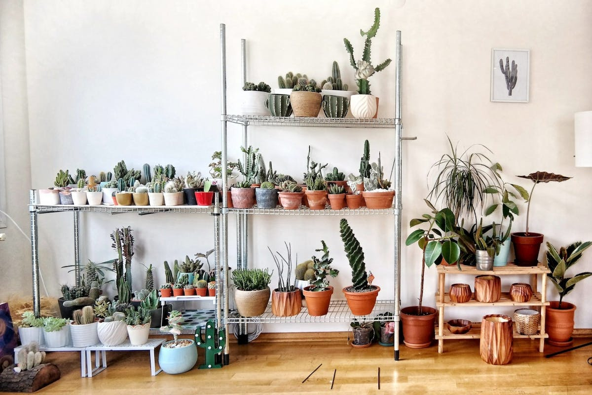 The best houseplants to spruce up your flat