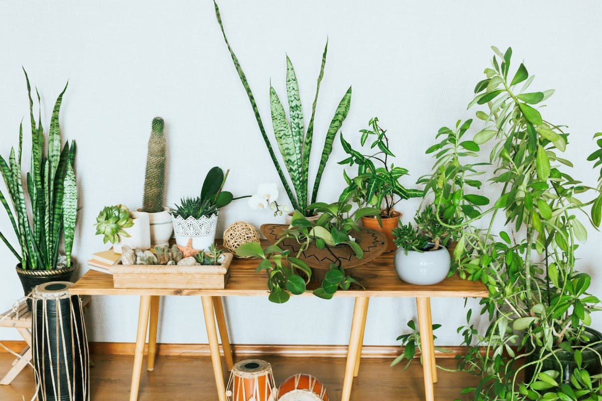 Houseplants on Instagram: 9 of the best accounts to follow.