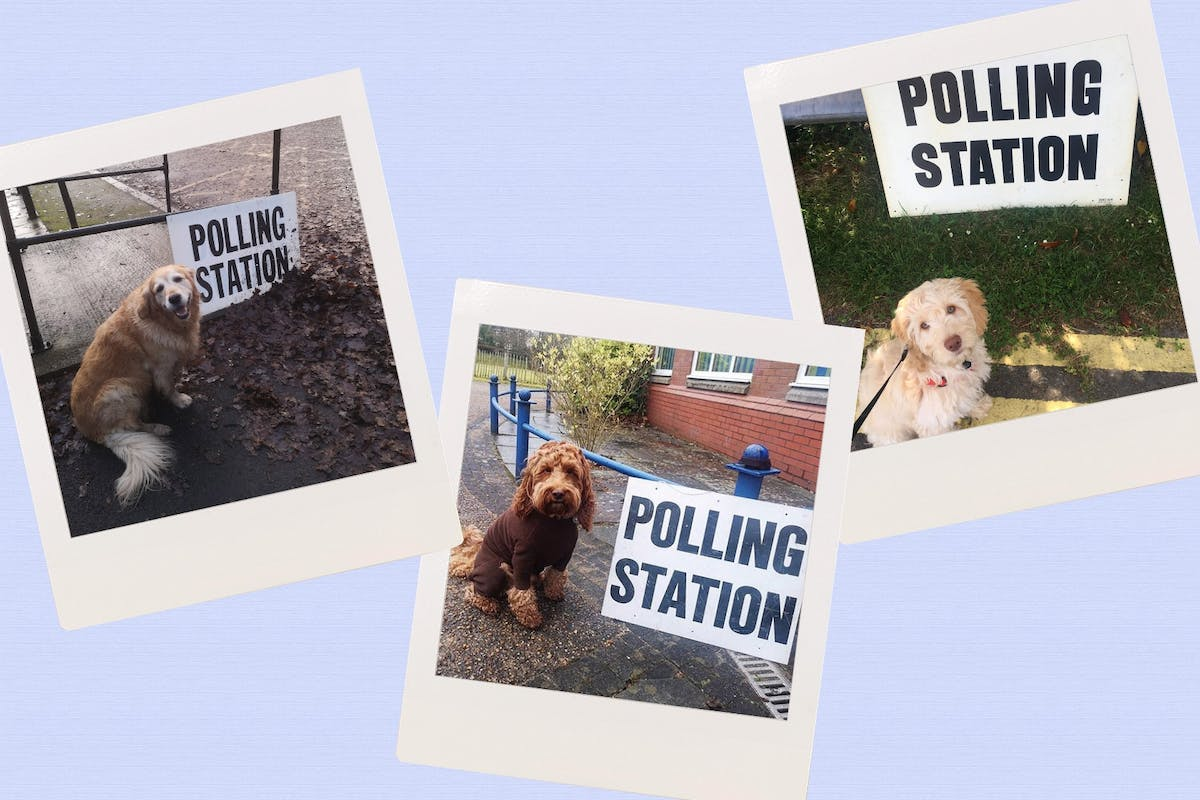 #dogsatpollingstations: meet the dogs taking part in today's general election.