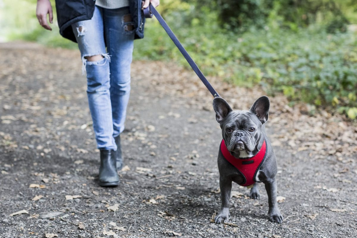 Dog walkers can find friendship and solidarity in each other.