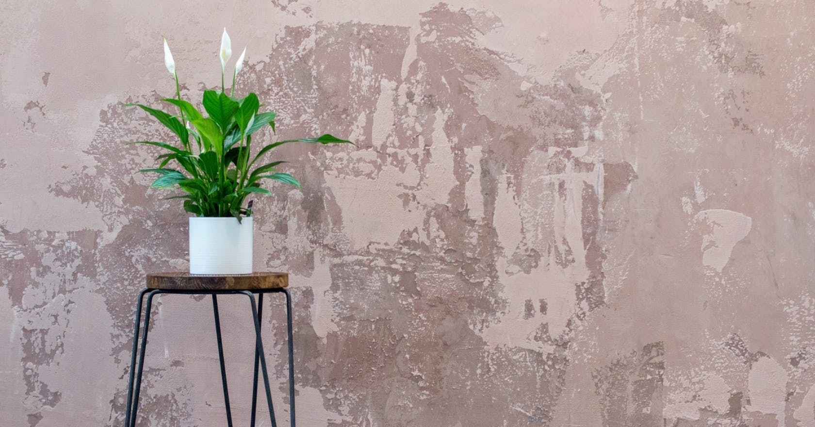 4 easy-care flowering houseplants to bring a piece of spring into your home