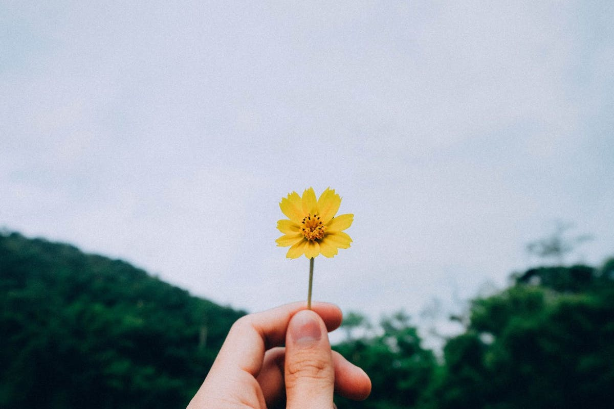 Coping with grief: hand holds up yellow flower against a grey sky