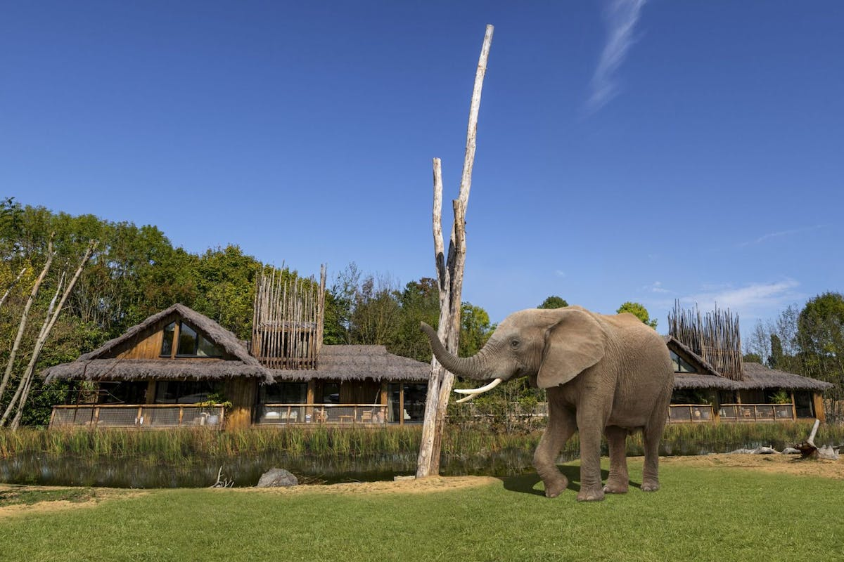 West Midlands Safari Park builds new lodges with elephants and cheetahs