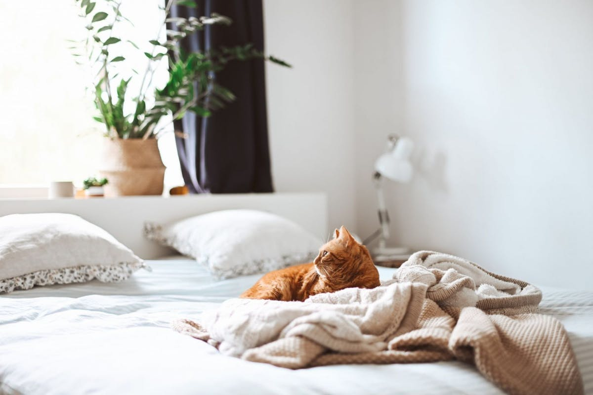 Cat lying on owners bed after freshly washing bed sheets
