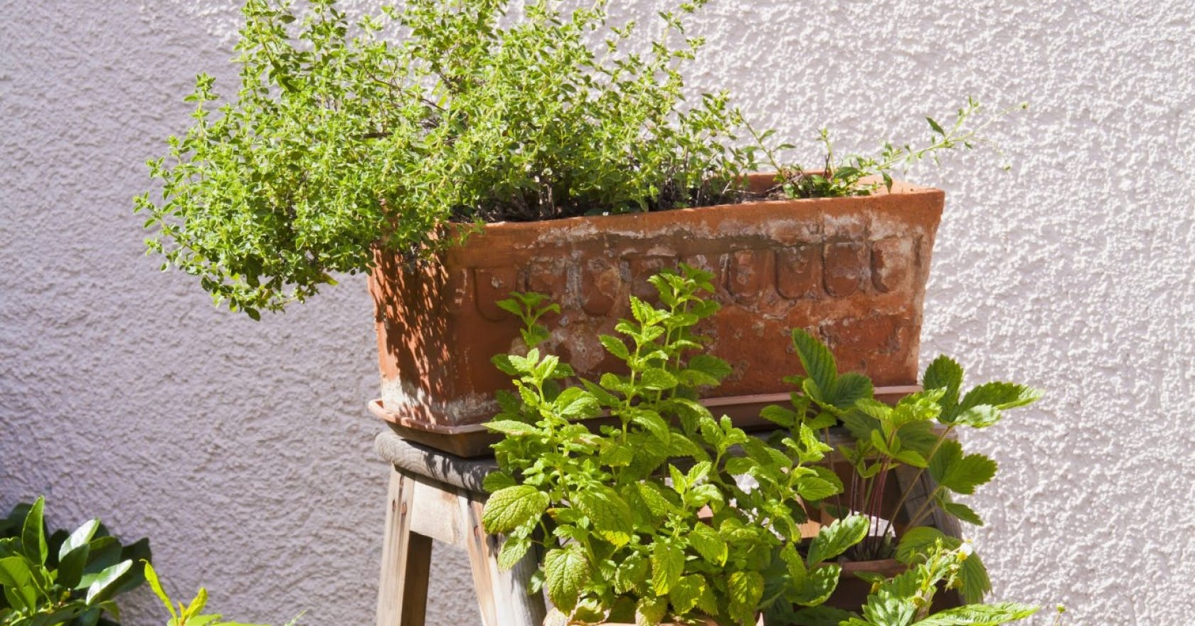 How to grow your own vegetables and herbs at home