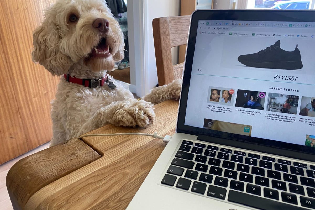 16 things every dog owner working from home knows to be true