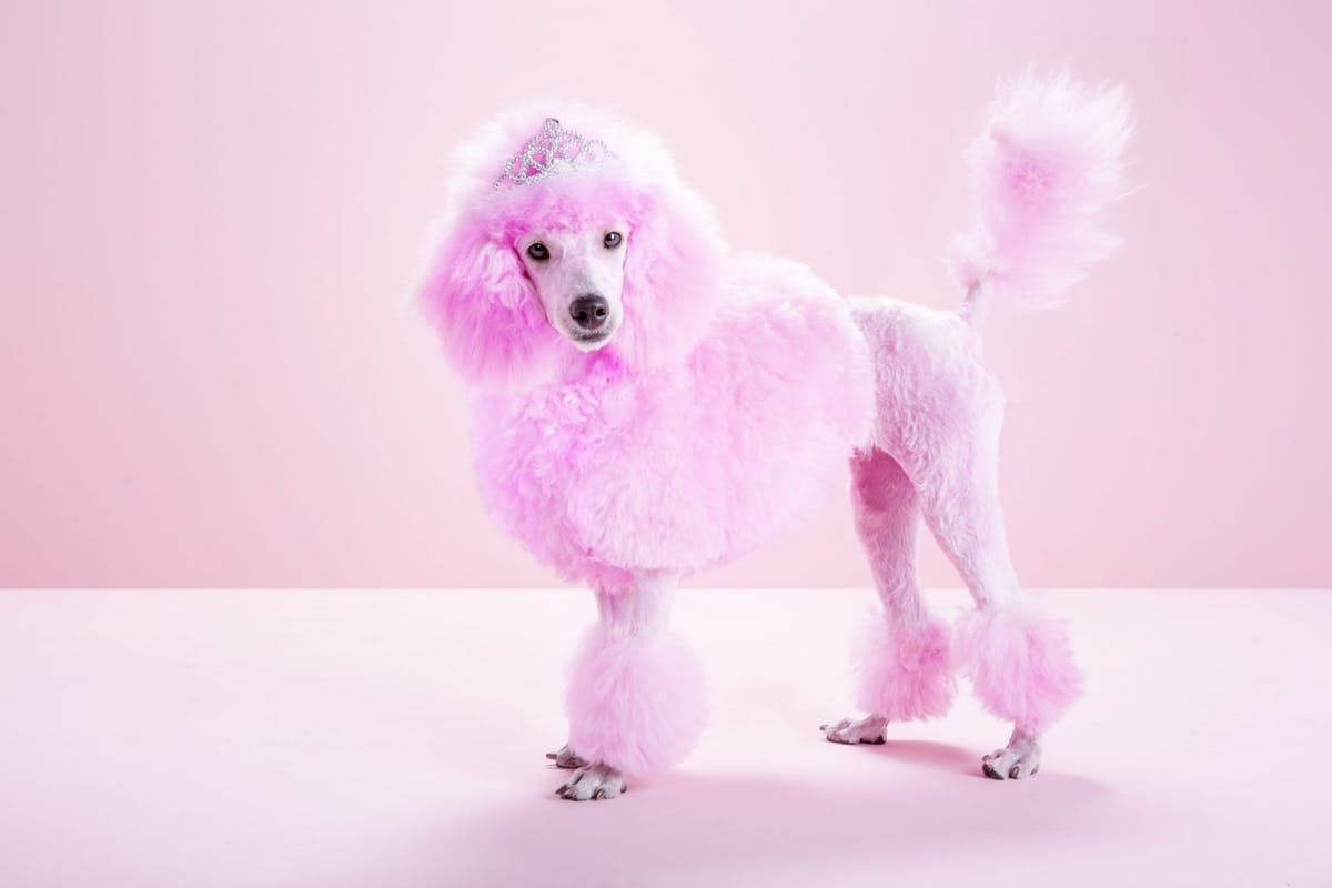 how-to-dye-your-hair-at-home-pink-poodle