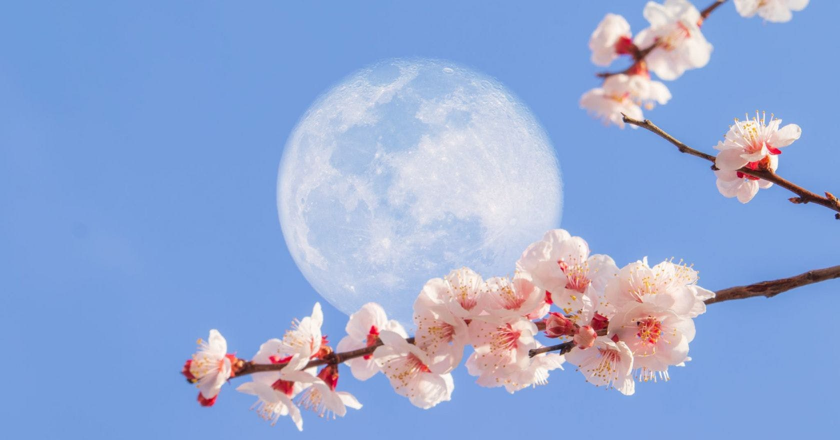 How will the Flower Super Moon in Scorpio affect your zodiac sign?