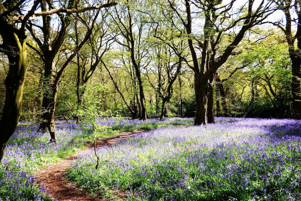 Woodland walks in London