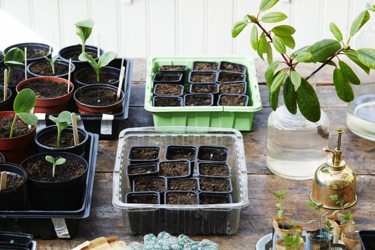 A setup to grow plants from seeds