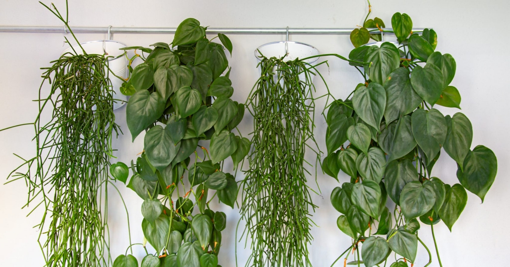 Hanging Plants 7 Trailing Plants To Create An Indoor Jungle