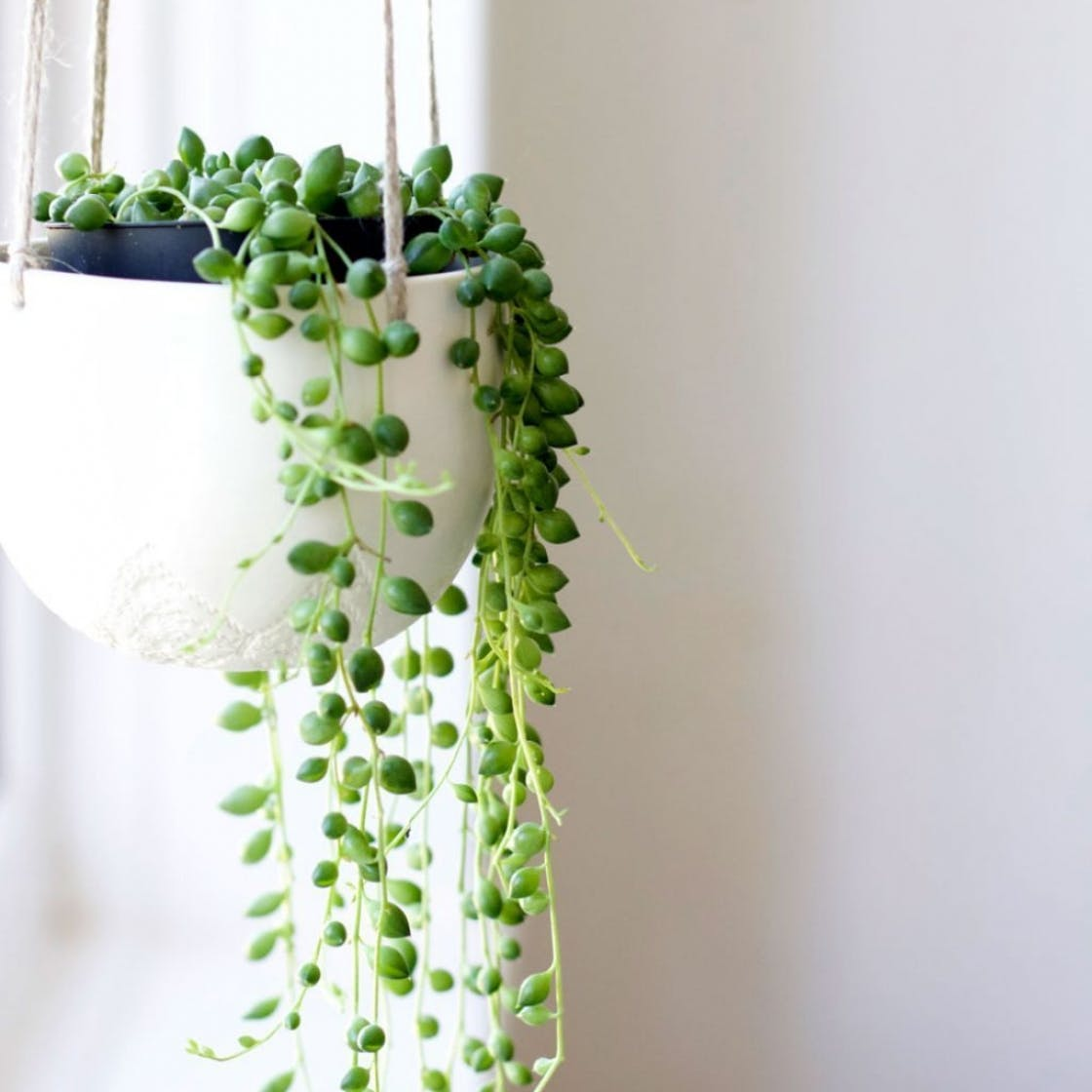 Hanging plants: 7 trailing plants to create an indoor jungle