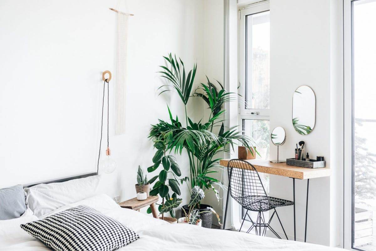 A collection of large plants in the corner of a bedroom