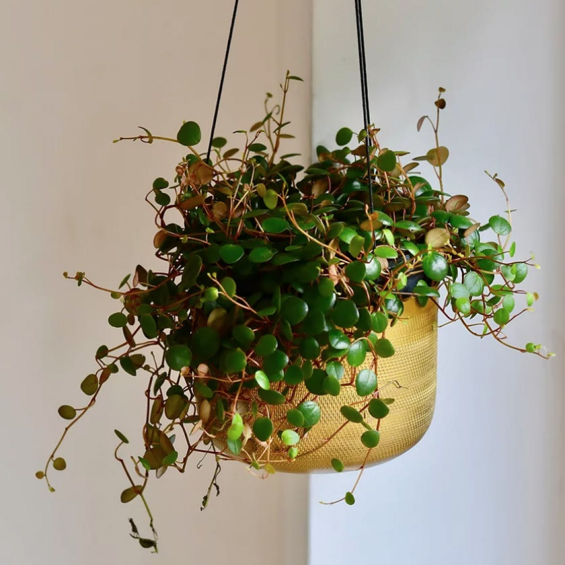 7 Unusual Houseplants To Add A Splash Of Excitement To Your Home