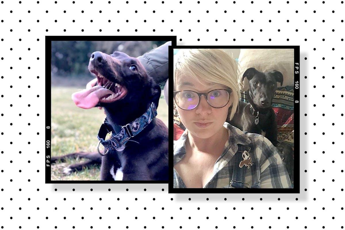 Adopting a rescue dog in lockdown
