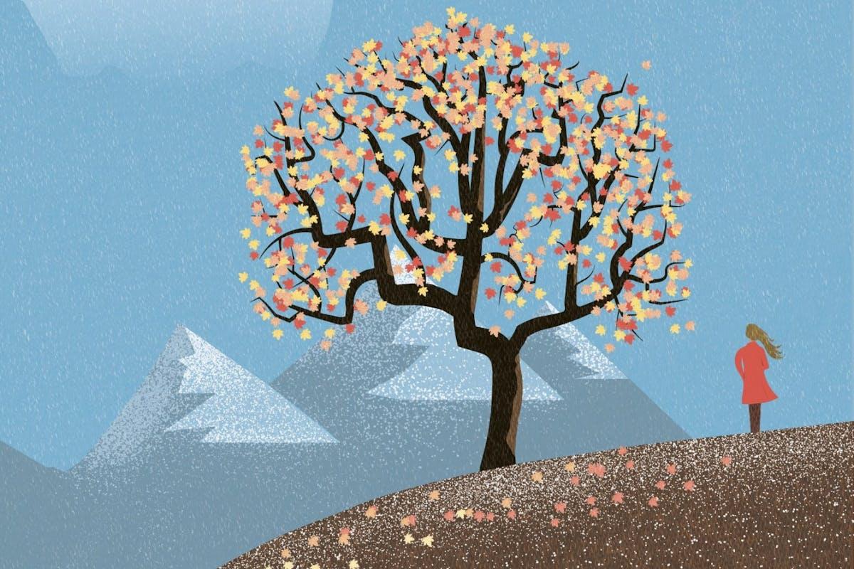 Autumn 2020: Maple tree in the mountains