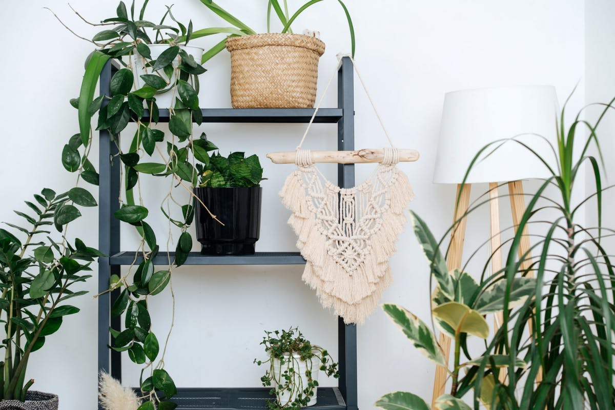A collection of plants on a shelf