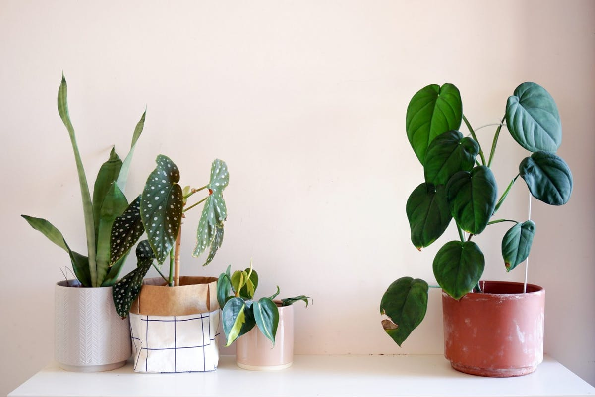 Low-light houseplants to bring life into your home this autumn