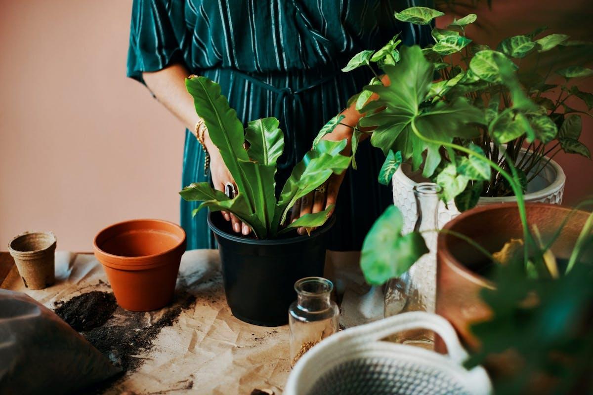A woman repotting a plant