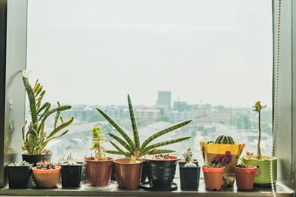 A collection of plants on a windowsill overlooking a city