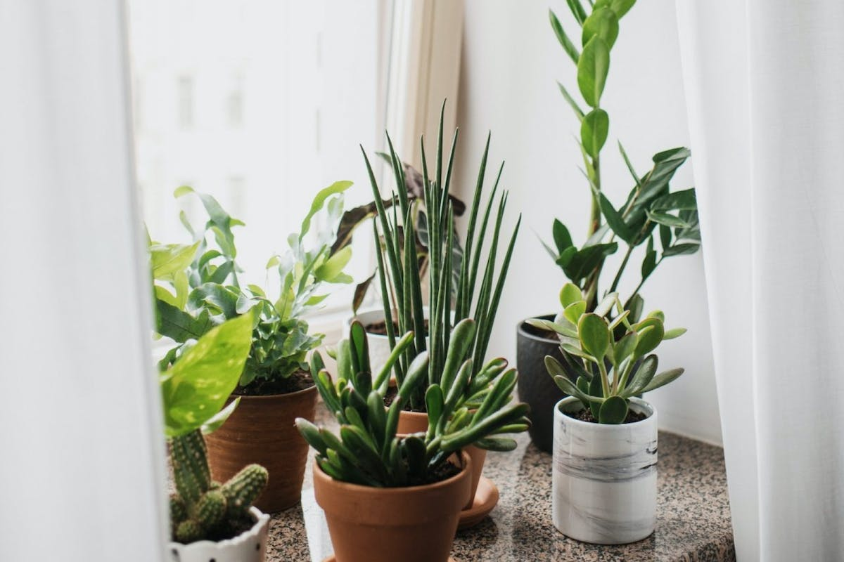 A collection of houseplants on a window sill