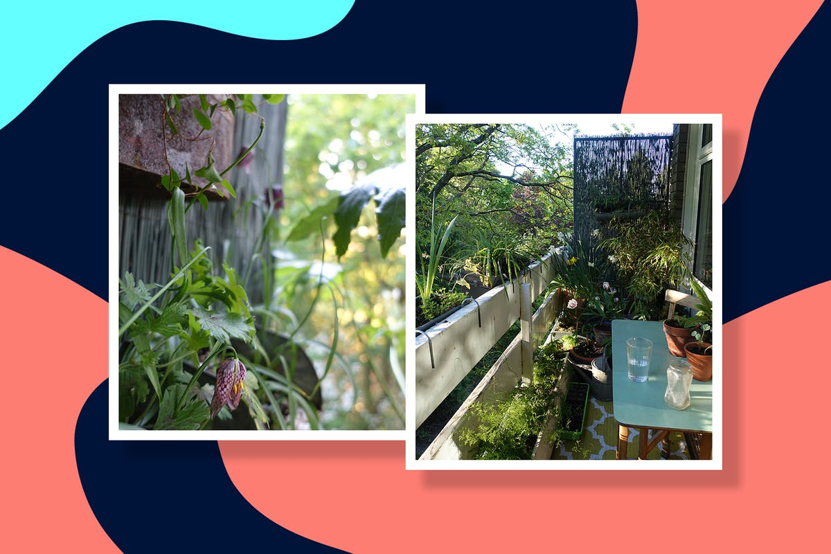 Alice Vincent's balcony treehouse garden