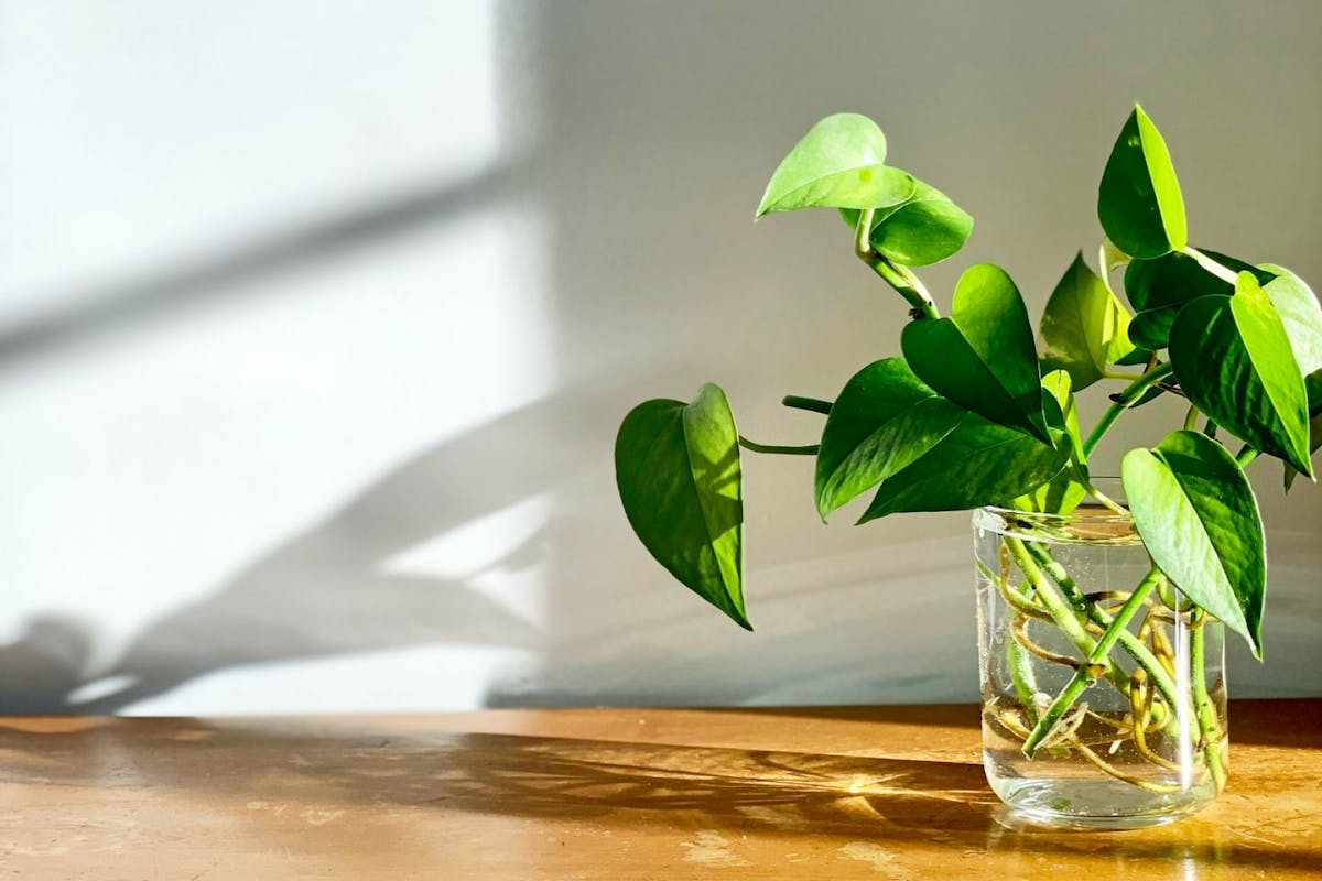 A collection of plant cuttings in a glass of water
