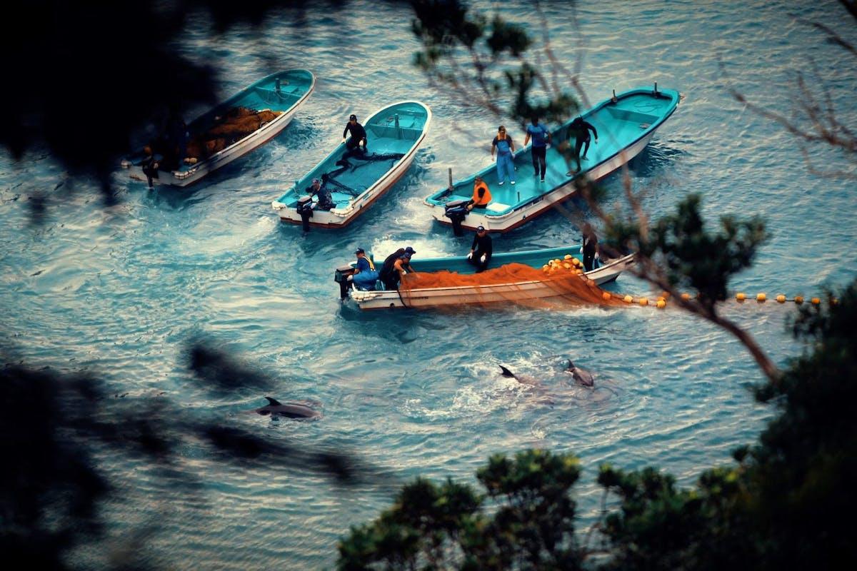 Netflix's Seaspiracy: Dolphin Cove