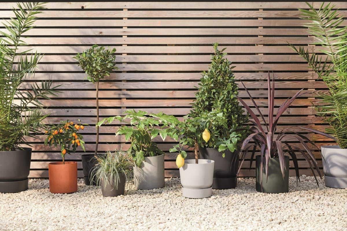 A collection of outdoor plants in pots on a driveway