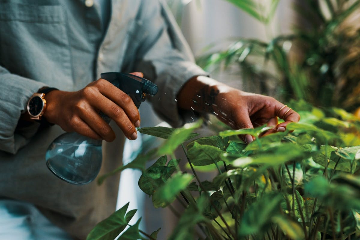 A woman misting her houseplant