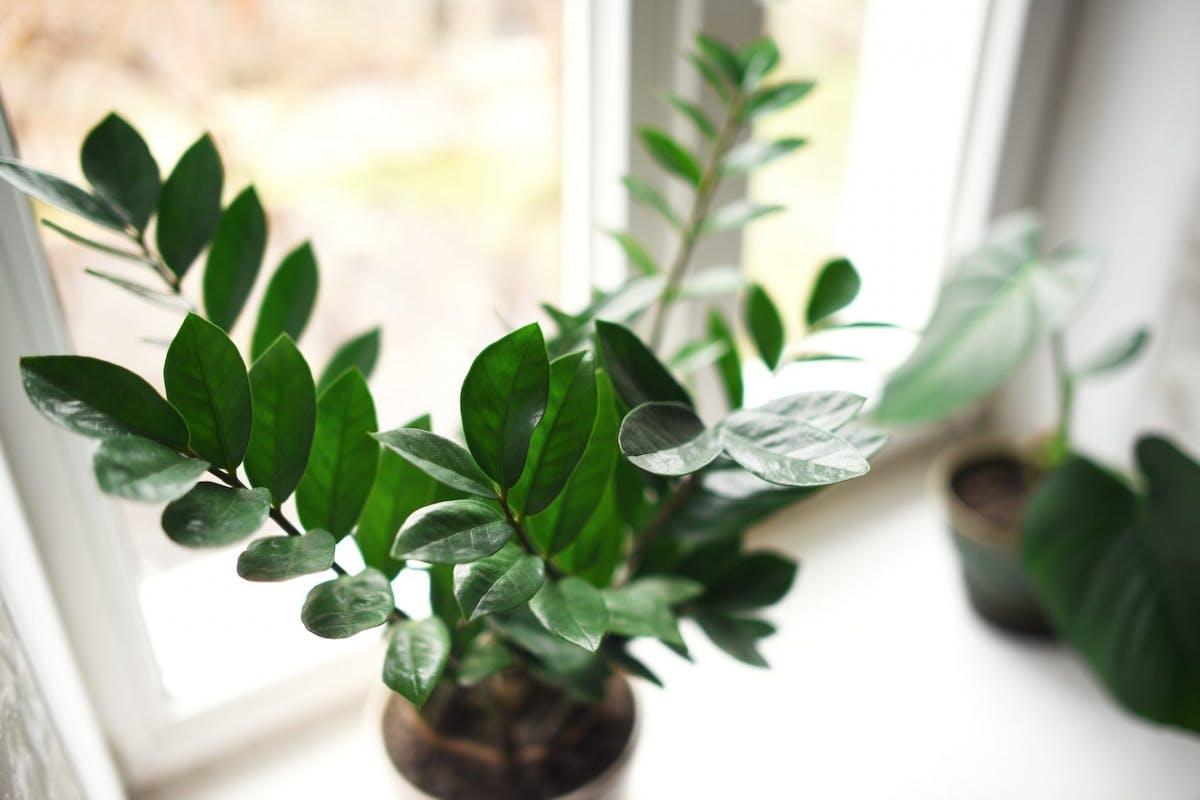 A plant on a windowsill