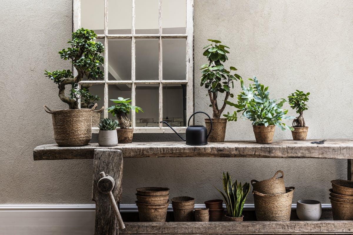 foli8 plants