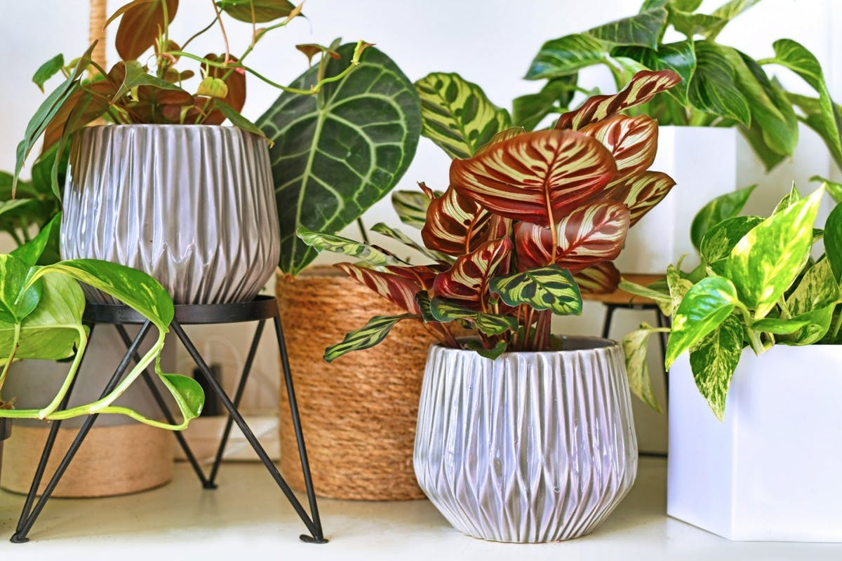 A collection of plants in different pots