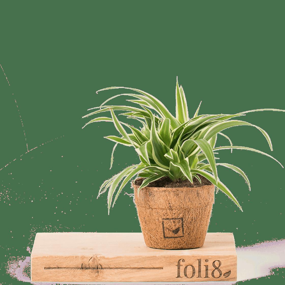 Bathroom plants 20 humidity loving houseplants to shop now