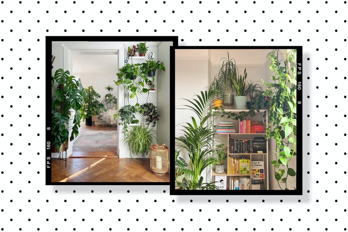 A collage of plant styling pictures