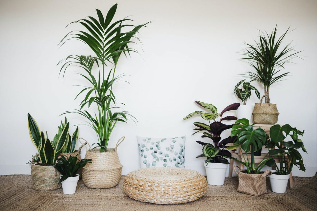 A collection of houseplants
