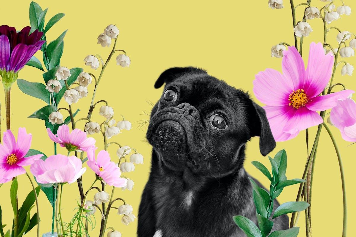 dog among flowers