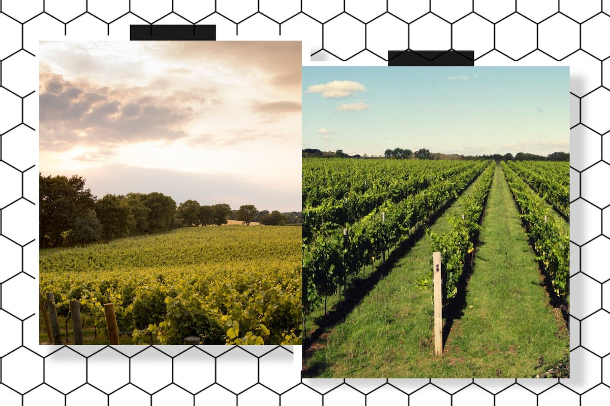 Best UK Vineyards: 9 of the best British vineyards to take a late summer visit to